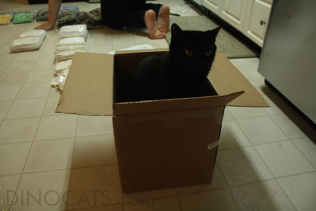 Gengar Commandeers The Box